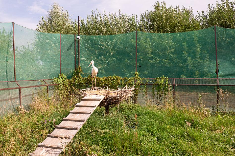 рязанский дом белого аиста