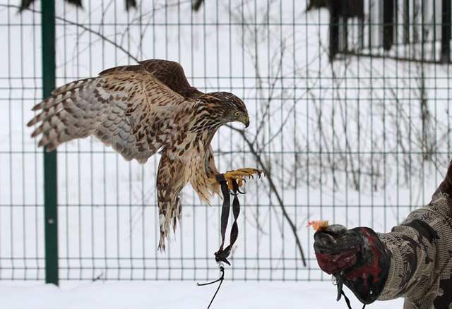 соколиная охота в Москве