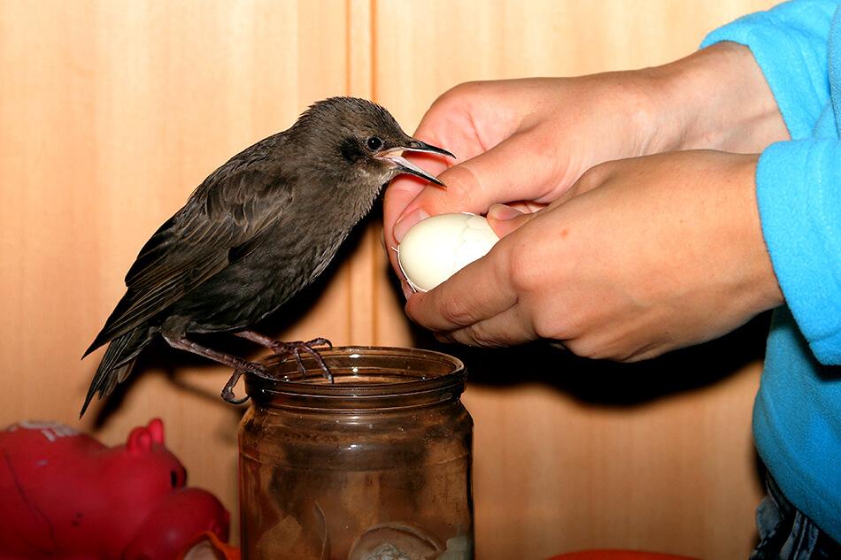 приют для птиц