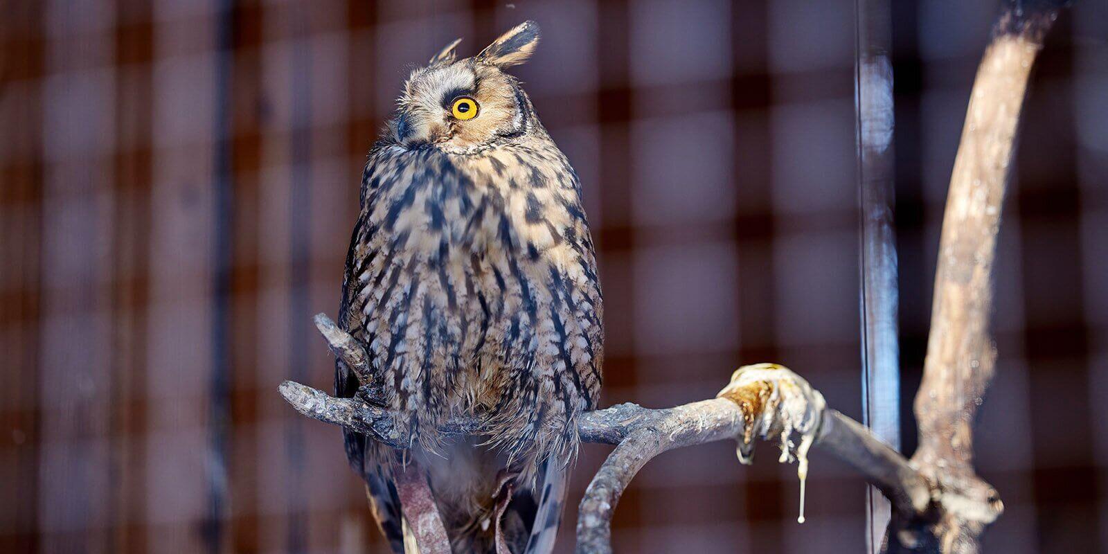 birds-ornitary-5