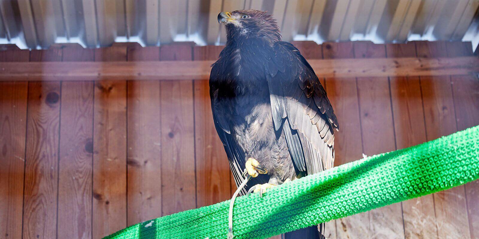 birds-ornitary-7