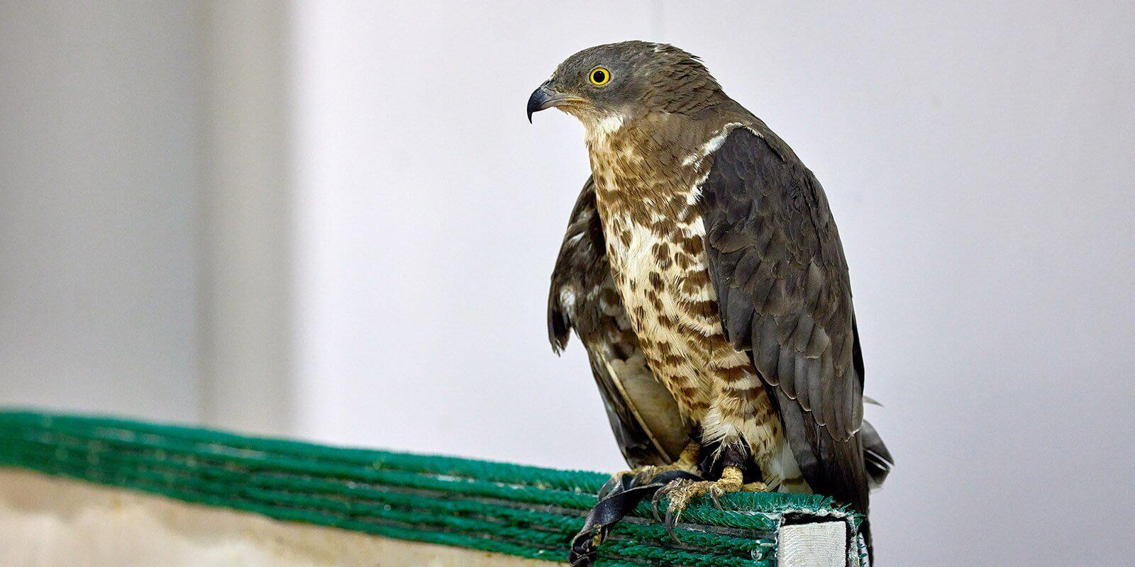 birds-sokolniki-1