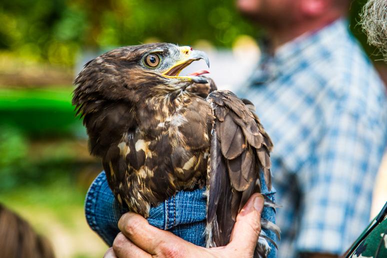 Выпуск птиц на волю